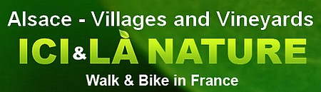 Alsace cycling holidays villages and vineyards