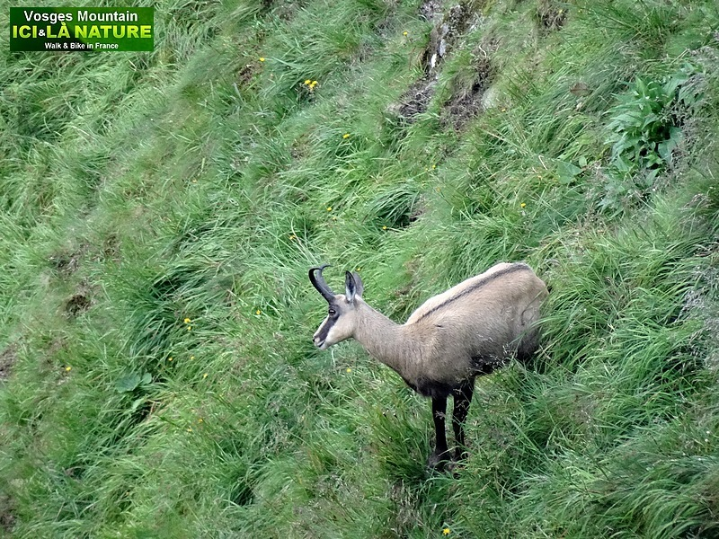 20-wild animals in french mountains