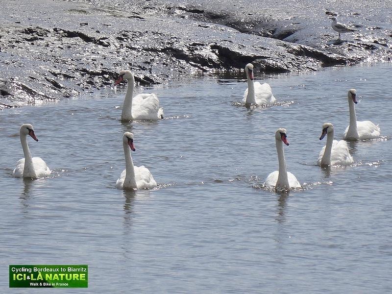 23-arcachon bassin birds