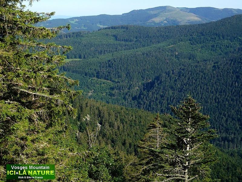23-forêt des Vosges