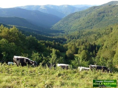 26- randonnées dans les Vosges