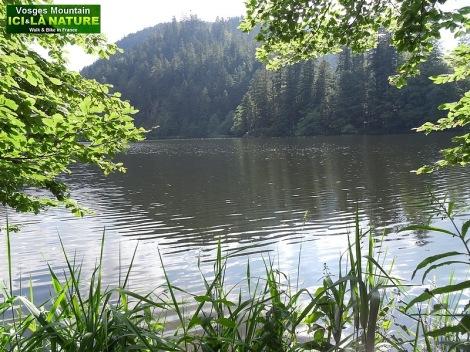 51-randonnée dans les Vosges