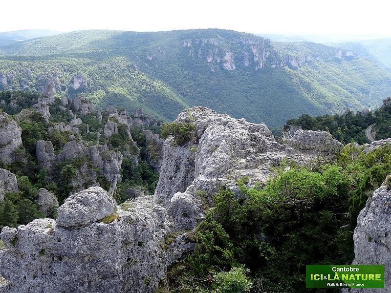 54- paysage causses cevennes