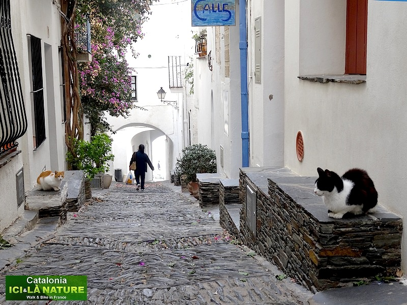 57-cats in the street spain