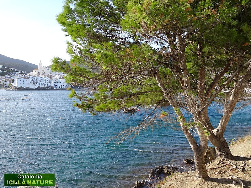 90-walking holidays costa brava cadaques