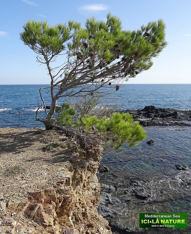 14- trail along mediterranean sea