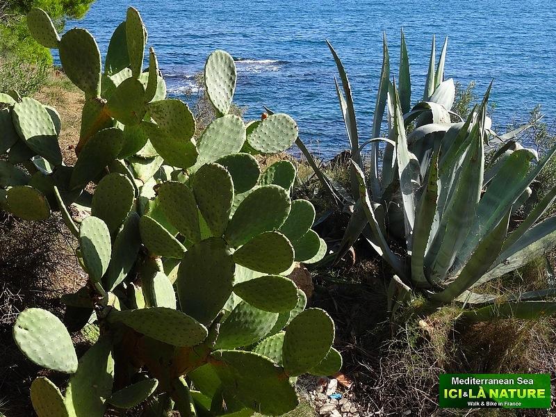 22- promenade vegetation mediterraneenne