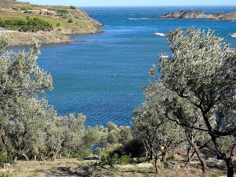 23-olive grove spain oliveraie