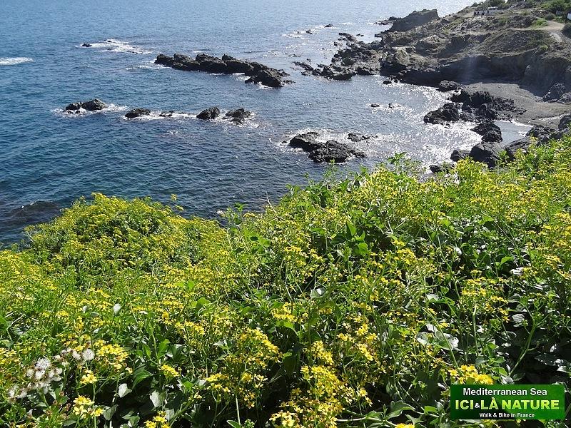 27- where walk in mediterranee