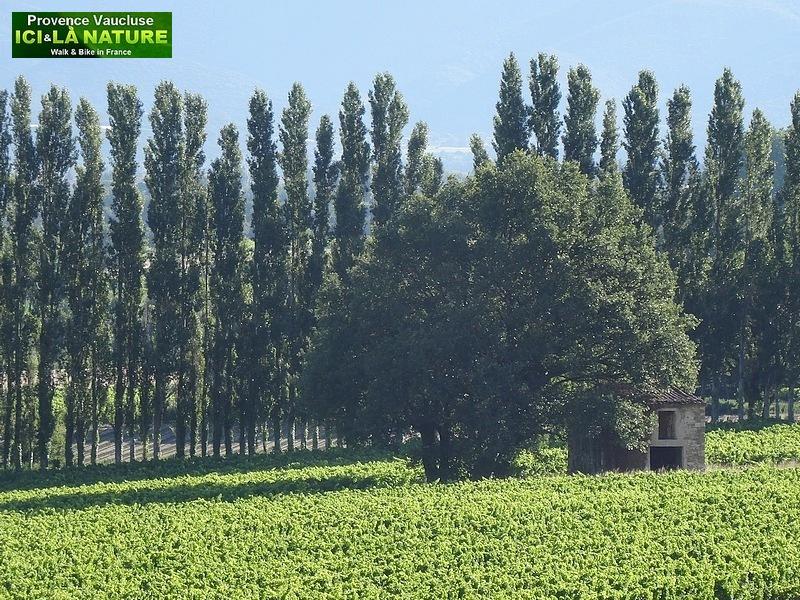 02-visit provence vaucluse