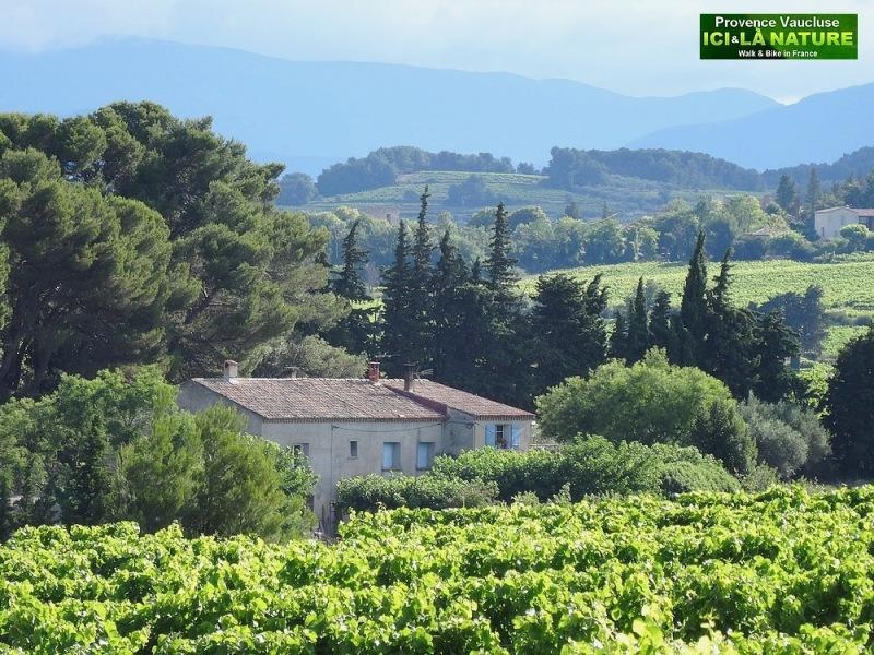 13-photo mas provencal