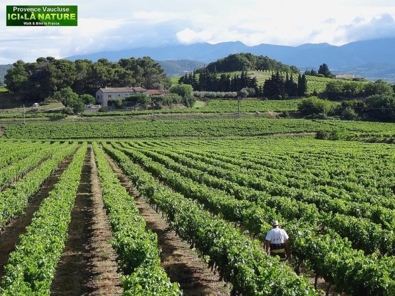 15-paysage de provence