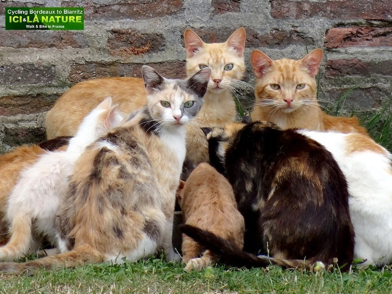 16-photos cats from france