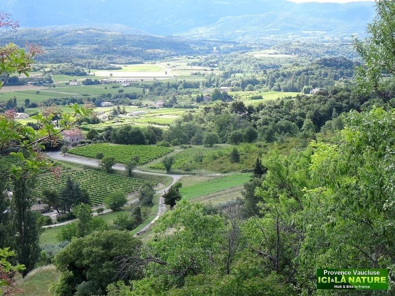 25-paysage vaucluse provence