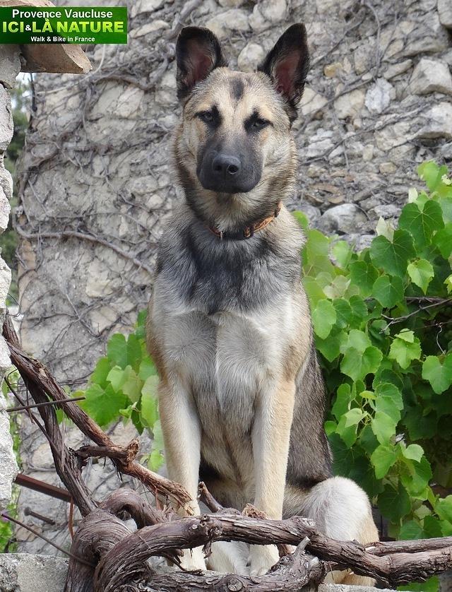 28-chien en provence