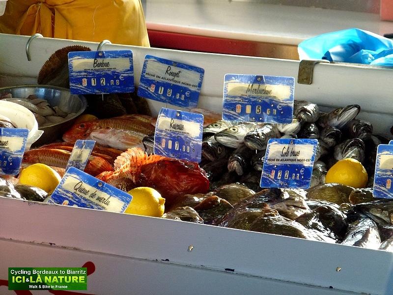 30-poissonnerie criée port de capbreton