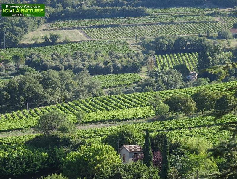 69-paysage de provence