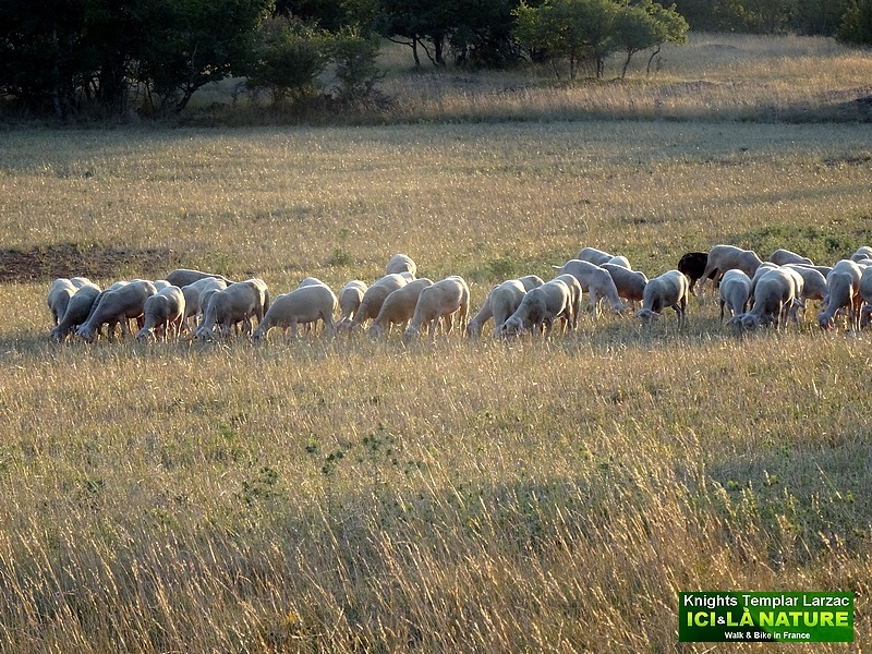 81-Paysage agropastoral CAUSSSES LARZAC UNESCO