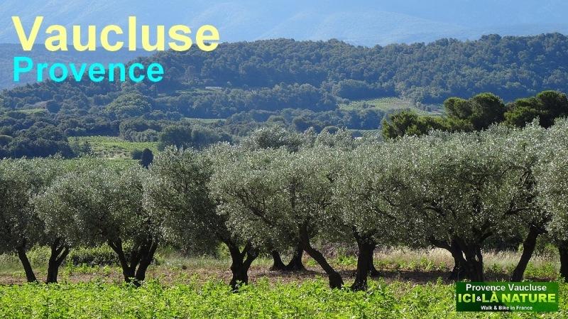 image provence vaucluse