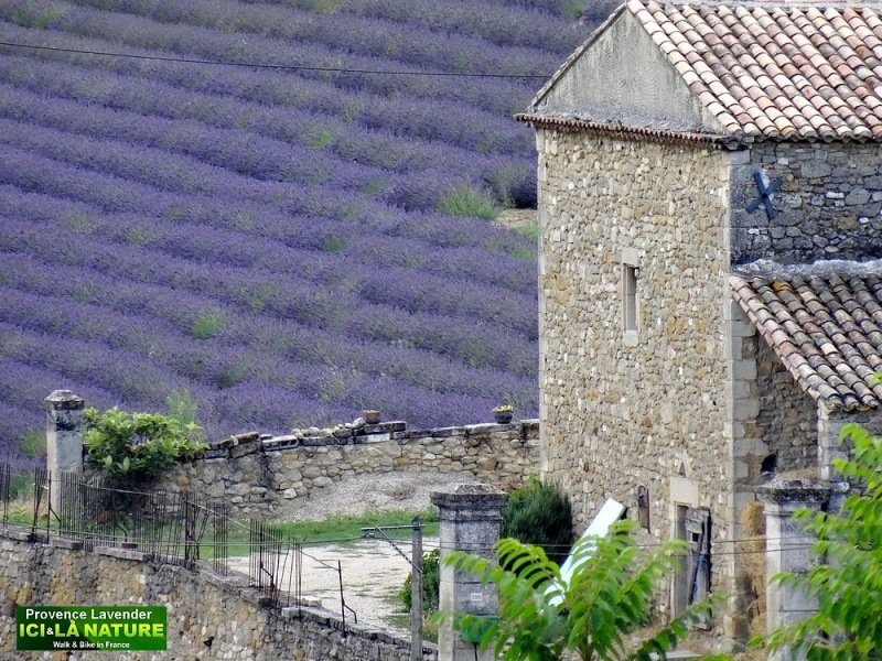 03-where to see lavender fields in provence france