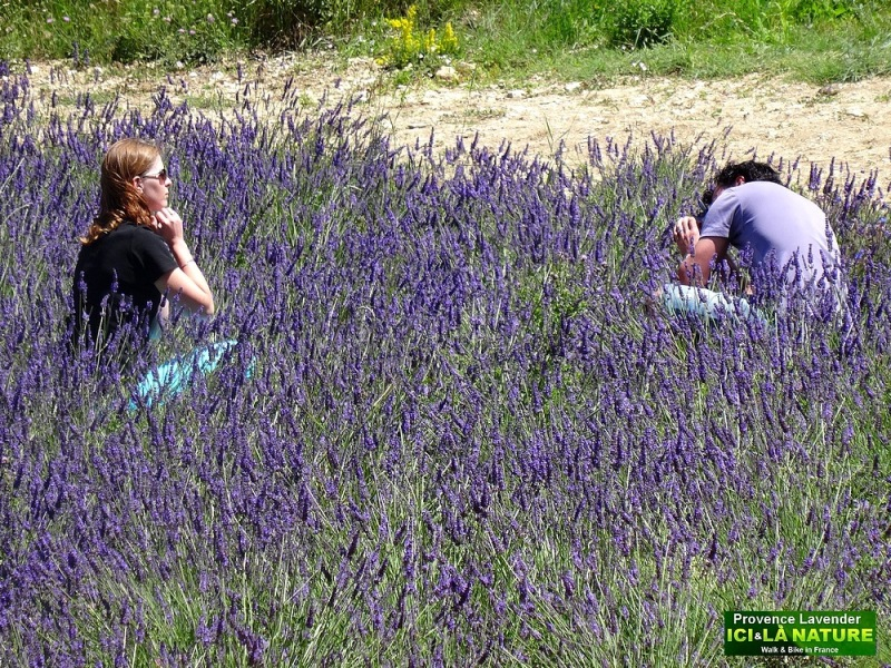 18-photography in lavender field