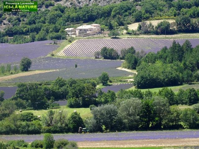 20-image paysage provence avec lavande