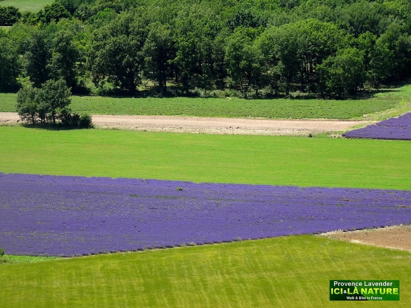 29-biking tours in provence lavender tour