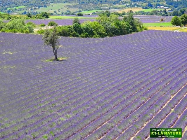 33-landscape provence france