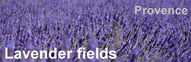 36-lavender fields provence