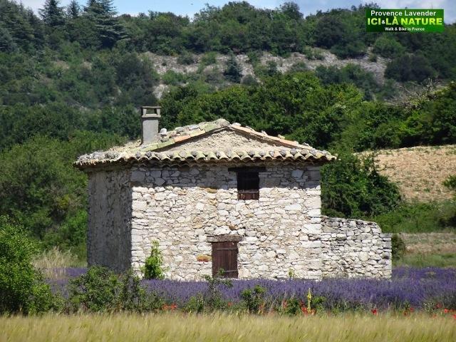 38-louer maison lavande provence