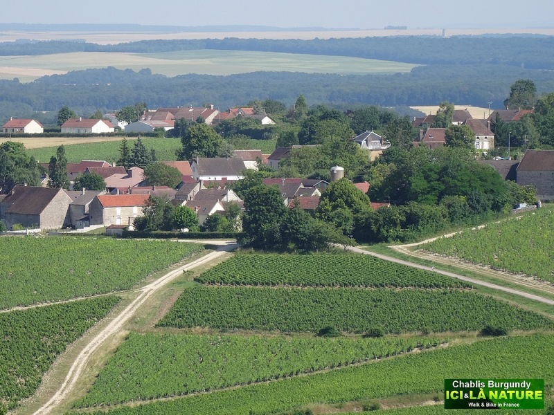 01-BURGUNDY VINEYARDS