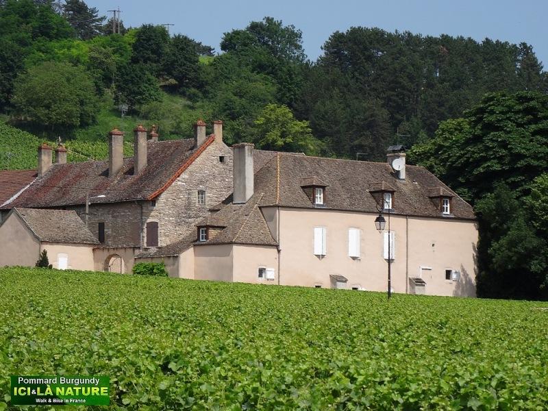 01-pommard burgundy wine