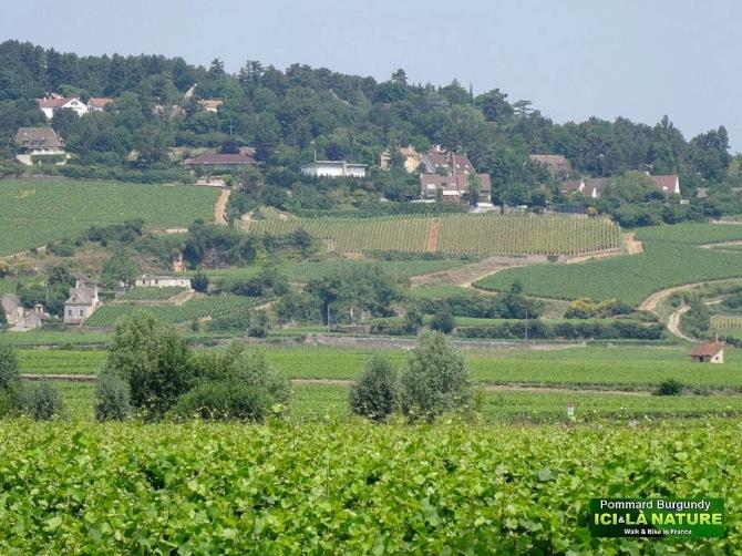 21-vignoble du bourgogne