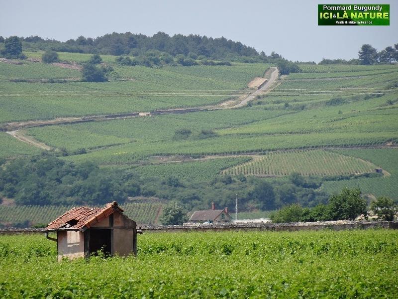 23-bourgogne burgundy vineyards