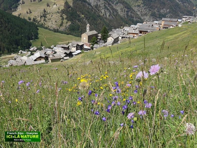 45-flore de montagne