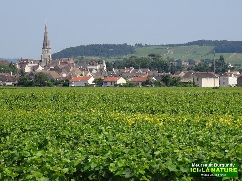 03-meursault burgundy wine