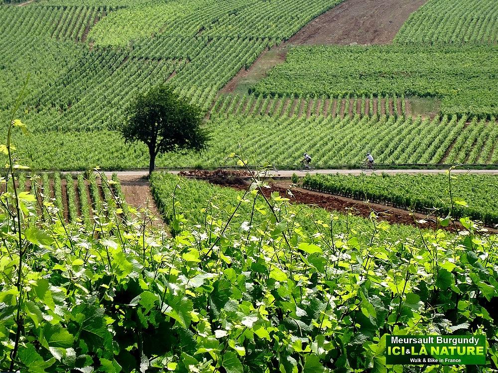 France – Burgundy Vineyards : Biking around Meursault, the ...
