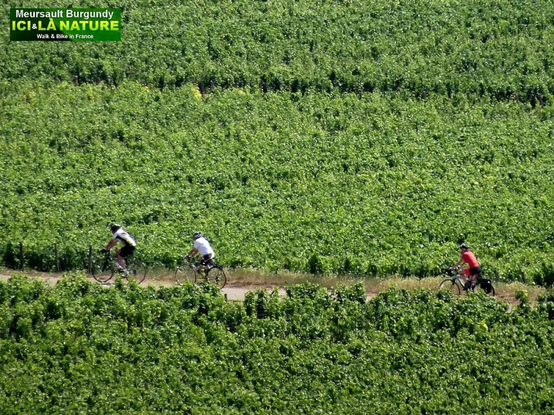 24-biking in france burgundy vineyards