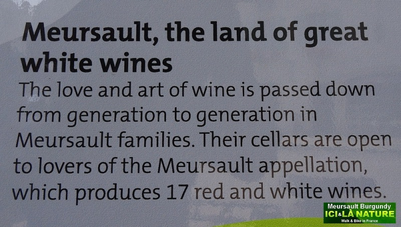 27-meursault the land of great white wine
