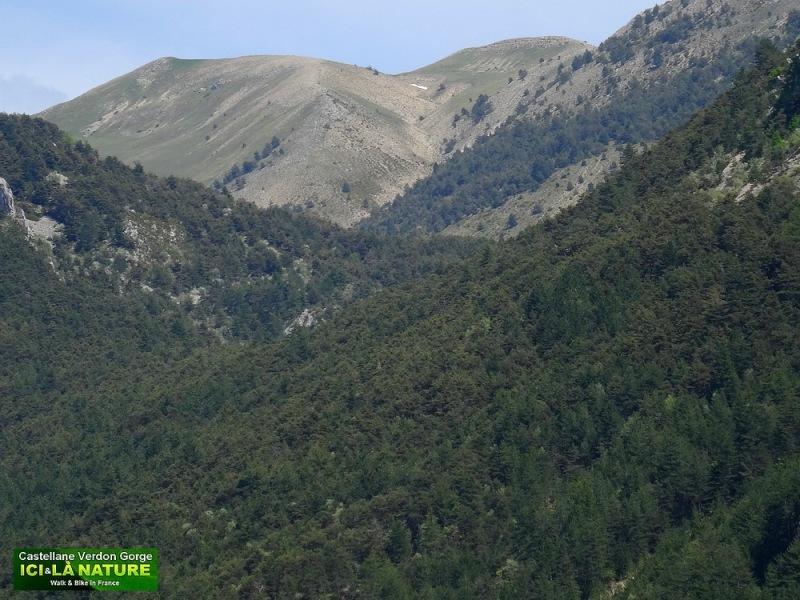 41-alpes du sud photos