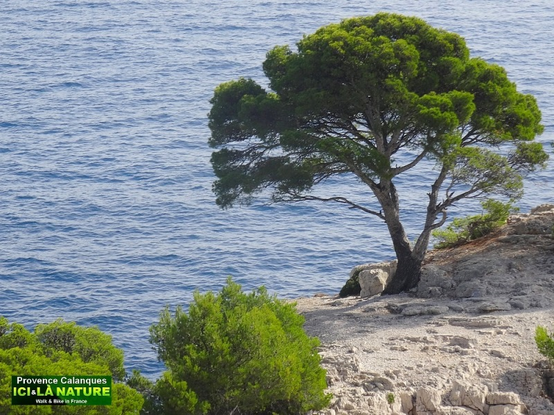38-hiking provence mediterranean coastal path