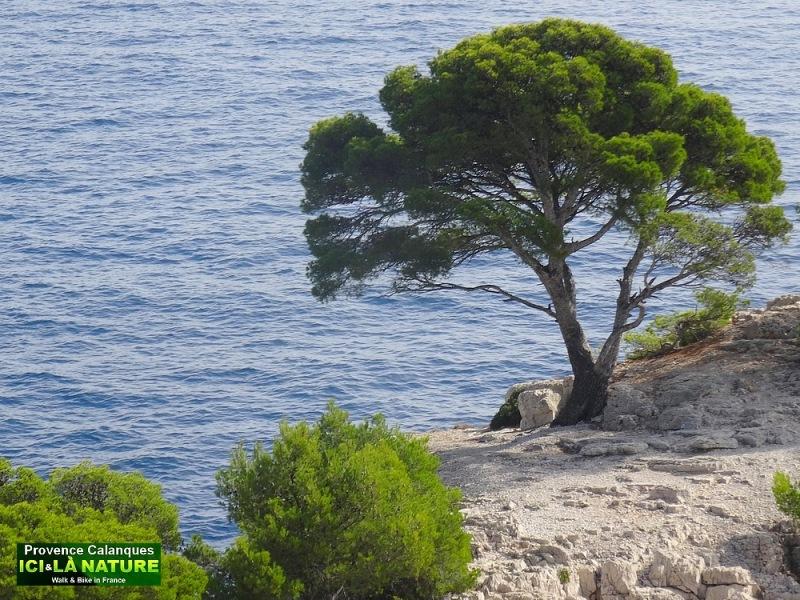 38-hiking provence mediterranean coastal path