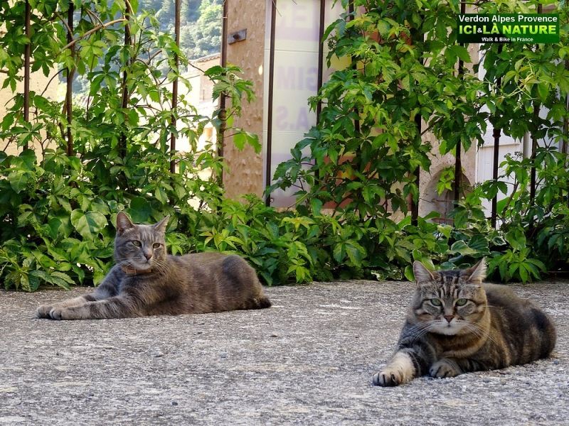 42-cats in france provence