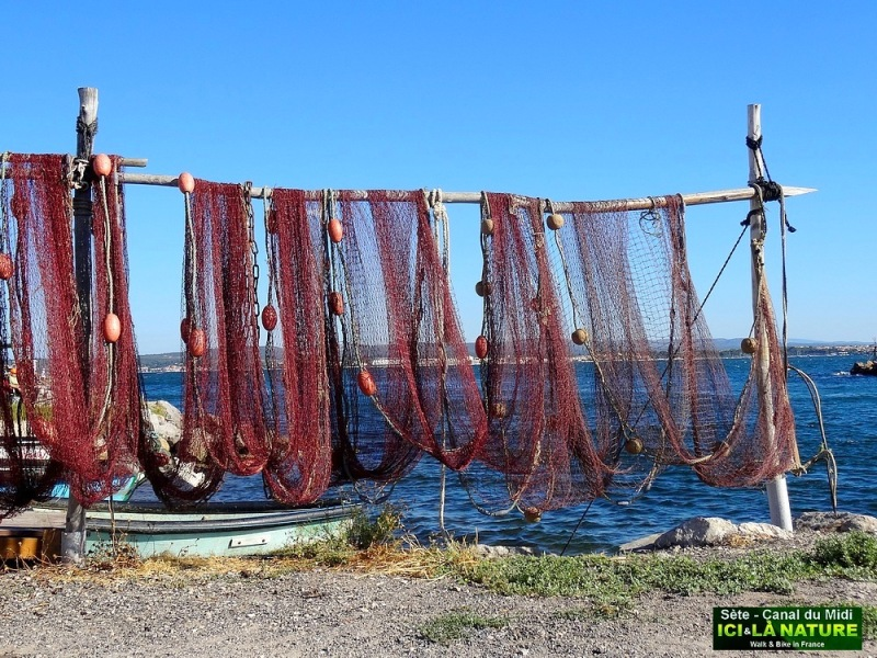 33-grand mare des canards sète brassens