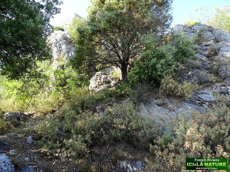 30-vegetation mediterranee