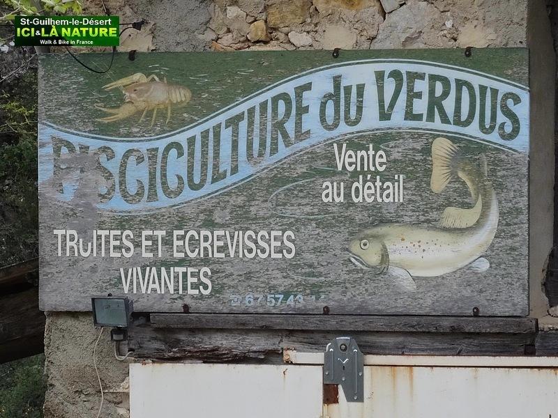 04-ST GUILHEM LE DESERT PISCILCULTURE DU VERDUS