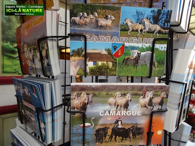 19-photos cards camargue