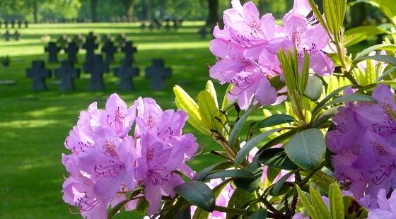 La Cambe garden of peace