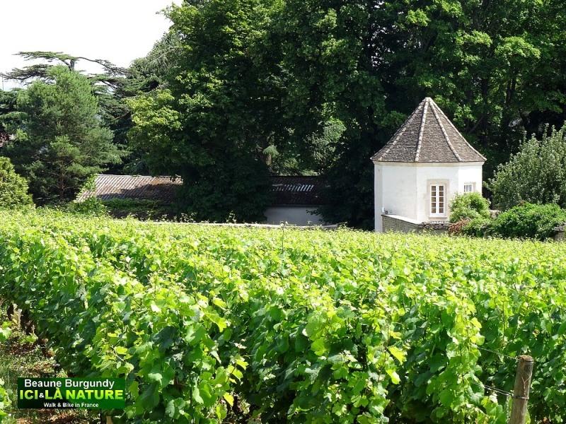 22-burgundy-landscape-image