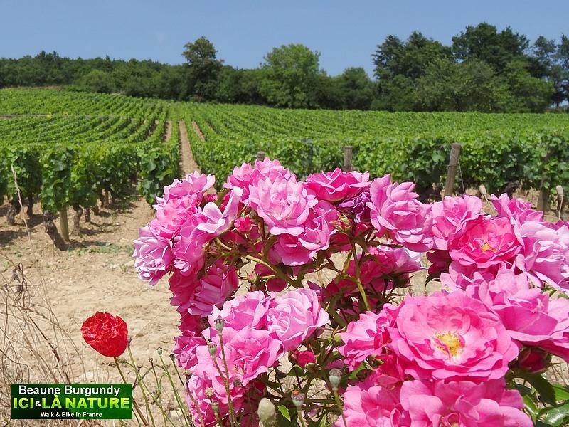 24-burgundy-landscape-vineyards